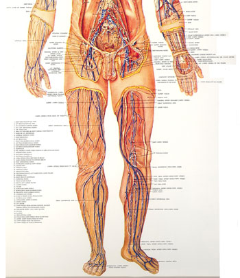 Lower Lymphatic System